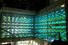 NIKE STORE KICHIJOJI 10thSPECIAL 3D ILLUMINATION